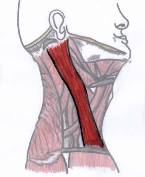 Jennifer Muller ostéopathe SCOM