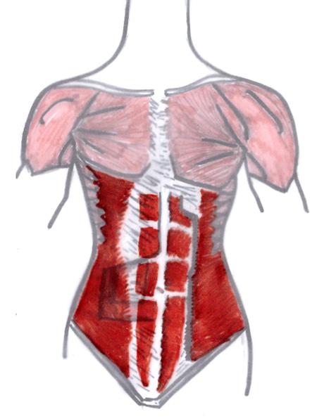 Jennifer Muller ostéopathe abdominaux