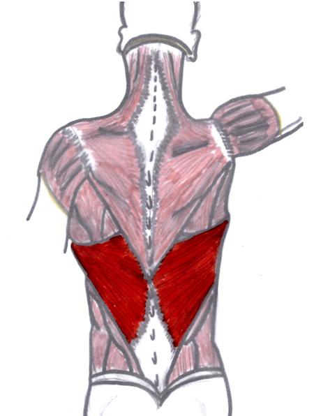 Jennifer Muller ostéopathe grand dorsal